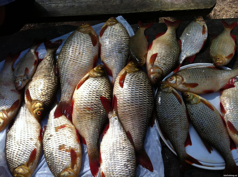 схема дна водоема где стоит рыба зимой