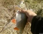 Фото трофейных рыб