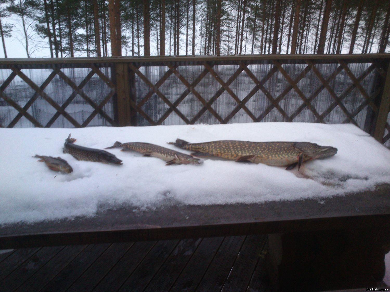 Suomi(Keuruu,10.03.2015)